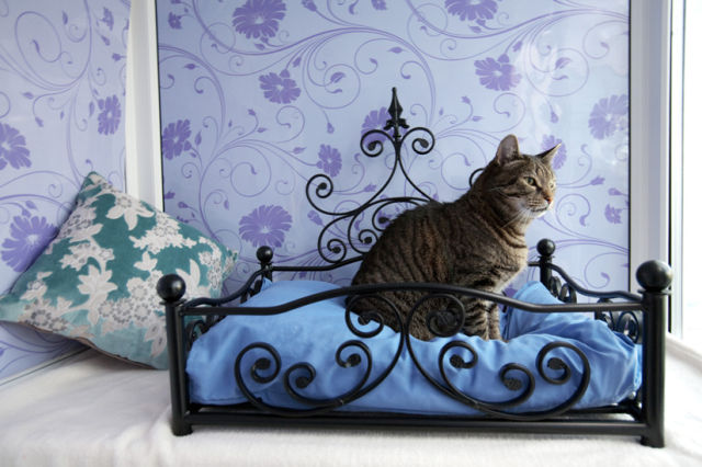 Luxury Hotel for Your Cat
