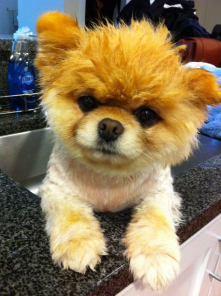 The Most Famous Dog on Facebook