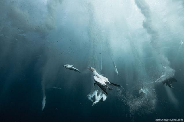 Majestic Underwater Sardine Dance