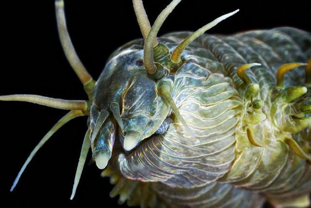 White Sea Aliens
