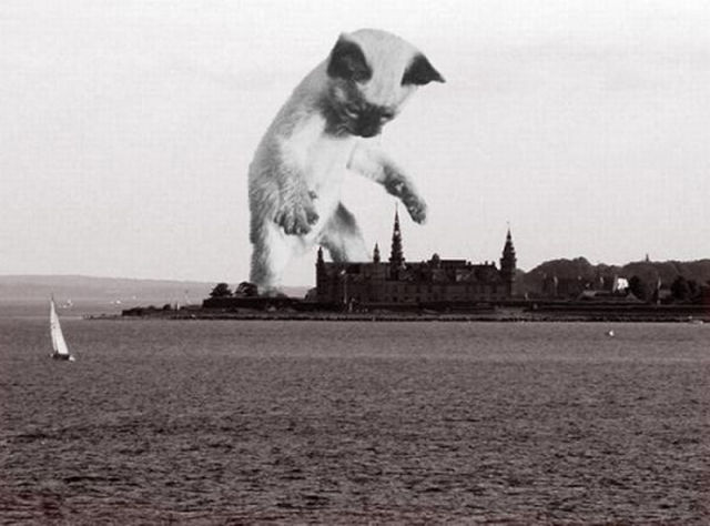 Catzilla Is Coming