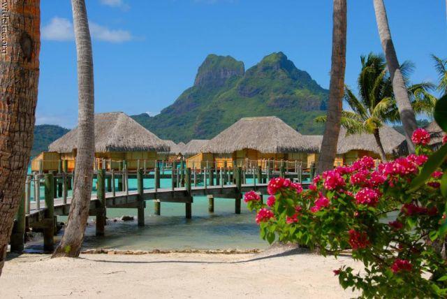 Gorgeous Island Paradise