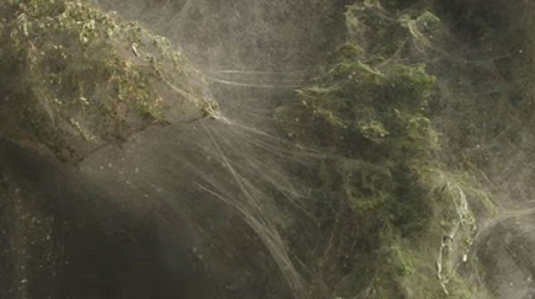 An Invasion of Spiders