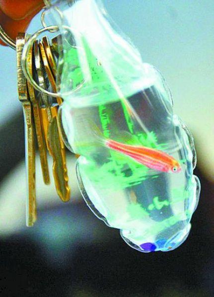 Uncanny Factoid: Living Key Rings