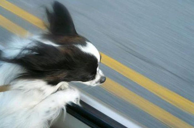 Funny Flying Dog Faces