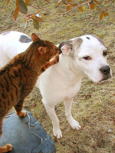 Animal Whisperers