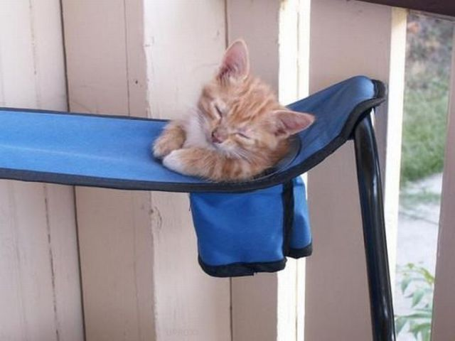 Catnapping