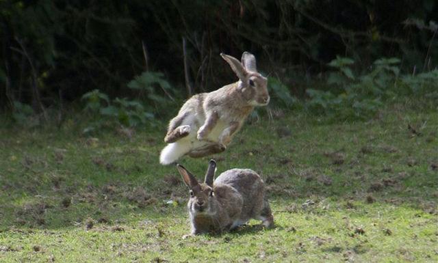 Hippity Hoppity Rabbits