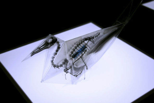 Cool Translucent Origami Of Endangered Species