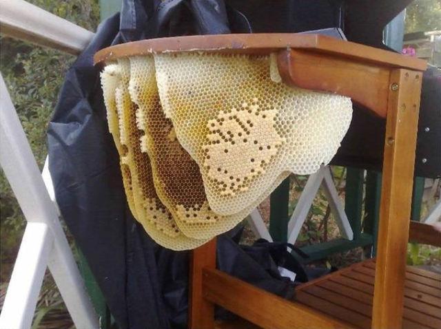 Massive Bee Hive Dealt Deadly Blow
