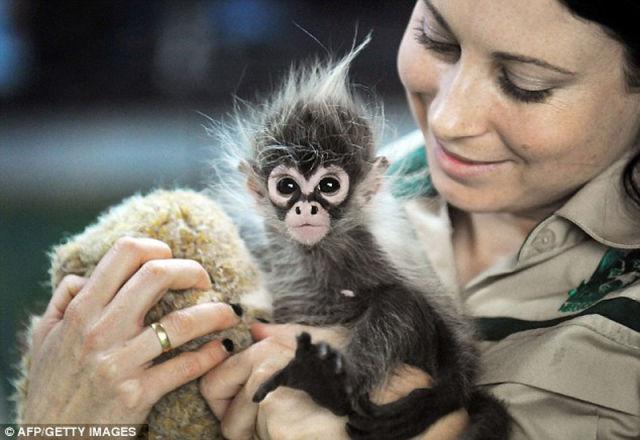 The Cutest  Baby Monkey I