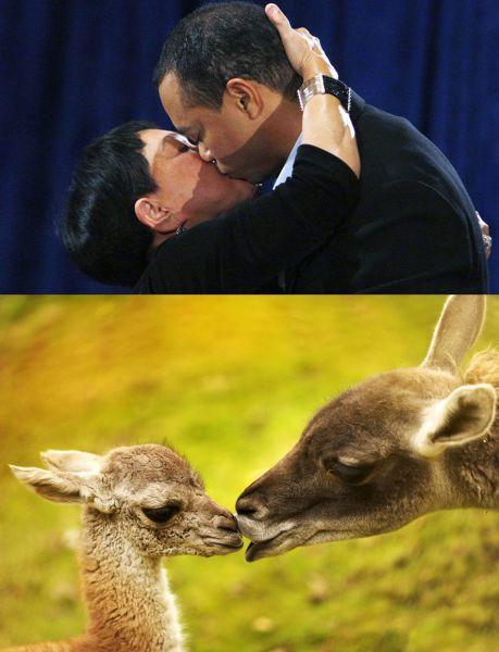 Species Similarity