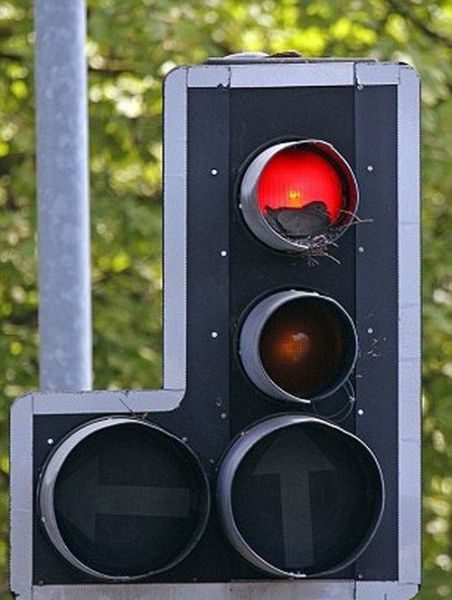 Traffic Light Mystery