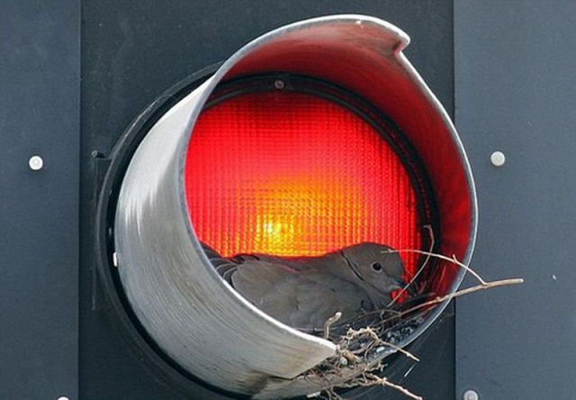 Traffic Light Mystery