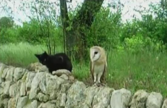 Cat and Owl Are Playing Together [VIDEO]
