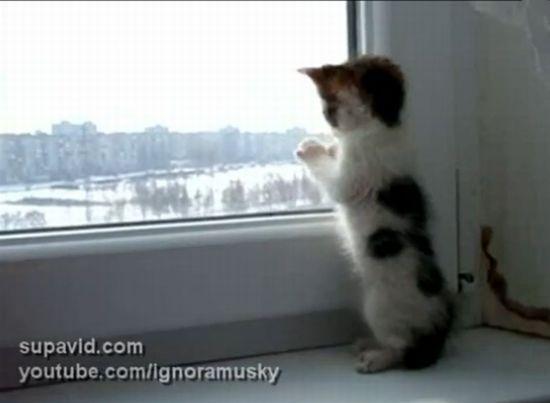 Cute Little Kitten [VIDEO]
