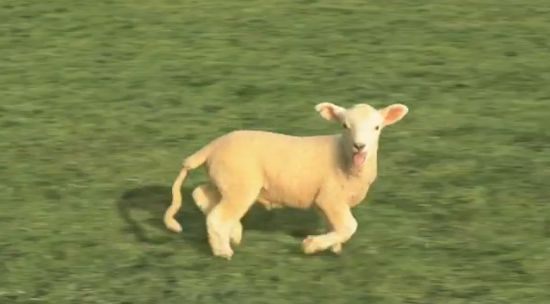 Surreal Sheep Animation That Will Rape Your Brain [VIDEO]