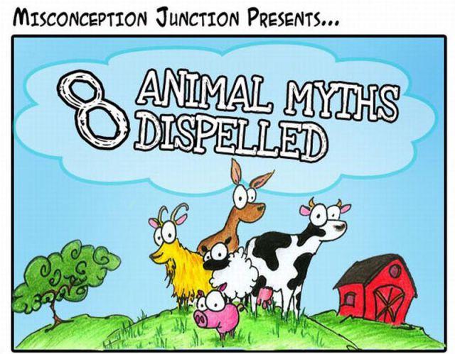 Busted Animal Myths