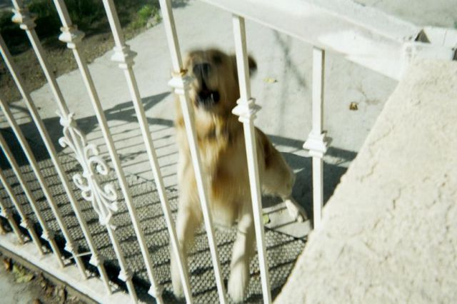 Postman Snaps Unfriendly Dog Photos