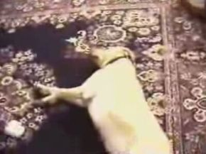 Smart Dog Plays Dead Better than You