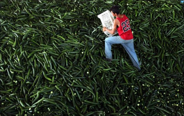 Europe Gets Rid of All Its Cucumbers