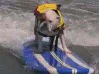 California Surfing Dogs