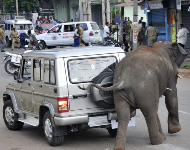 Wild Elephant Rampages in India