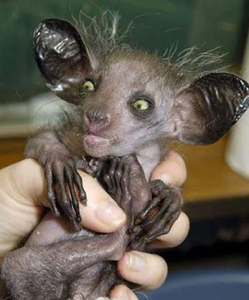 Flat Out Ugly and Disturbing Animals