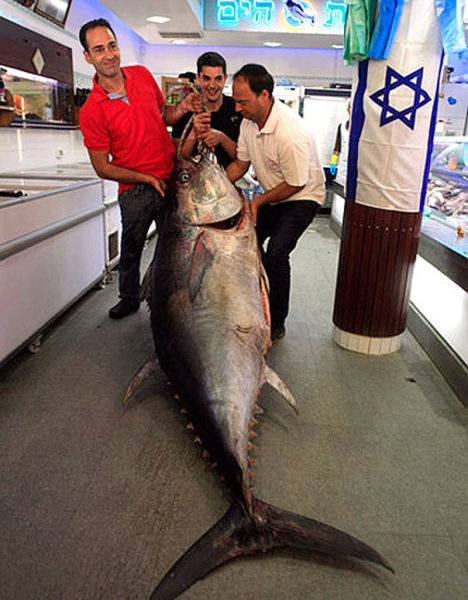 Huge and High Priced Fish