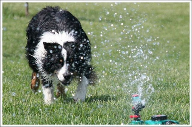 The Waterworks Treatment for Dogs