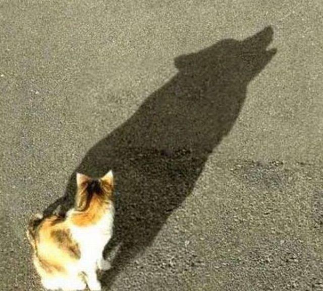 Some Very Creative Shadows