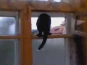 Cat Has Identity Crisis