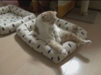 That's One Lazy Cat
