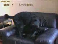 Funny Spinning Dog