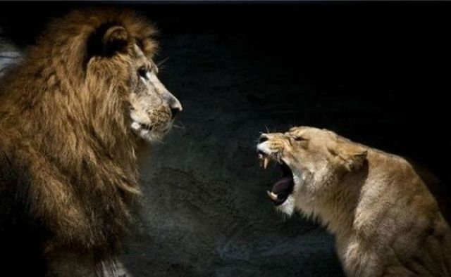 Ferocious Lionesses