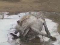 Cutest Hyena Ever