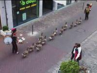 Meanwhile in Belgium