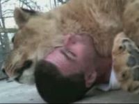 Guy Covers Himself with Lioness-Blanket