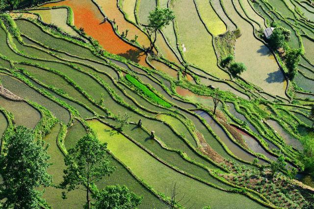 Amazingly Beautiful Rice Terraces