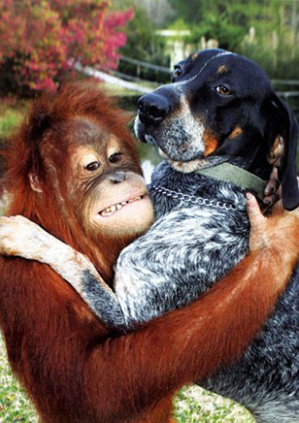 Best Buds: The Dog and the Orangutan