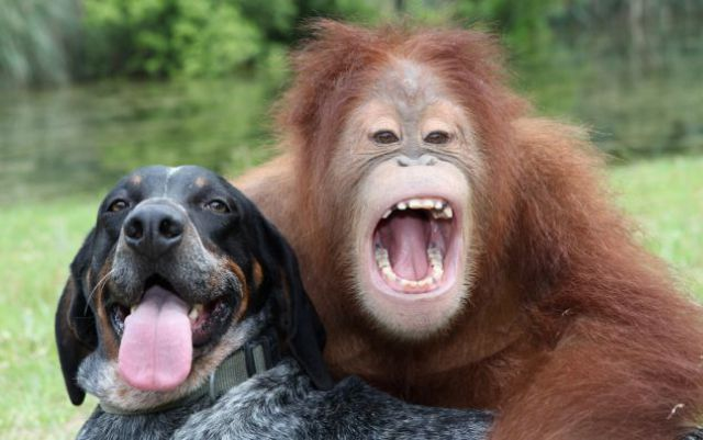Best Buds: The Dog and the Oranguta