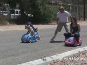 Unusual Dog vs Girl Car Race