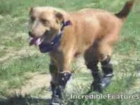 World's First Dog Fitted with Four Prosthetic Paws