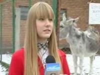 Donkey Interrupts Interview by Farting
