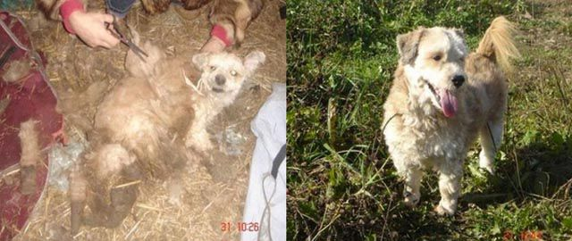 Animals Before & After Rescue