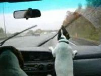 Dog Hates Windshield Wipers