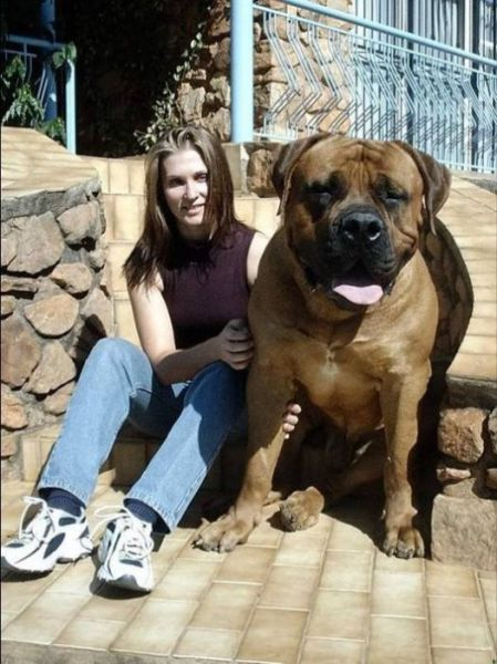 Supersized Creatures