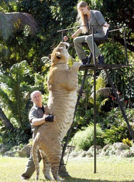 Supersized Creatures