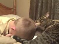 Cat Loves Licking Young Boy's Head