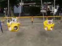Dogs Enjoying Swings